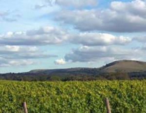 Albourne Estate Vineyard and Winery Tour Event Image