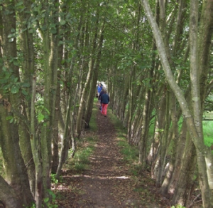 Mid Sussex Ramblers Walk 2 Event Image
