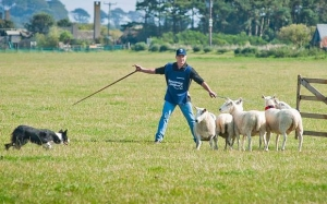 Sheepdog display in Danny Park 11am Event Image