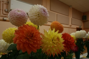 Hurstpierpoint Horticultural Society Autumn Show Event Image