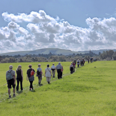 Walk with Mid-Sussex Ramblers Event Image