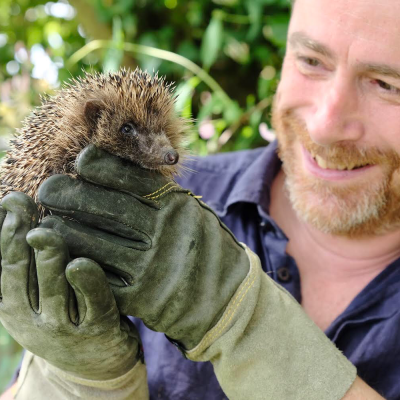 Hedgehogs - How we can help and why we should care Event Image